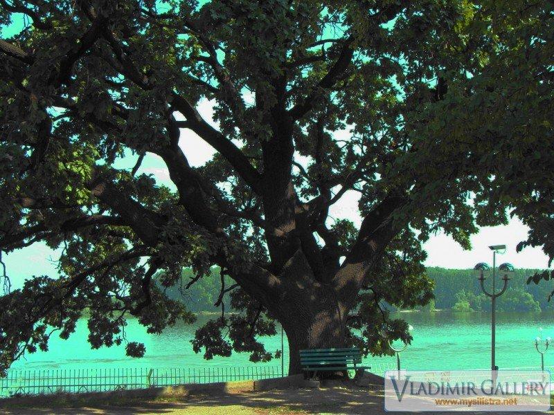 Дърво в Дунавски парк