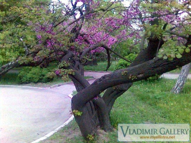Дунавска градина 15