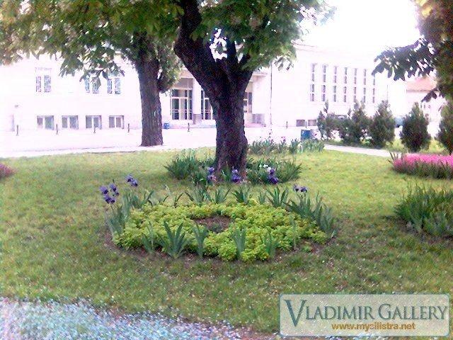 Дунавска градина 21