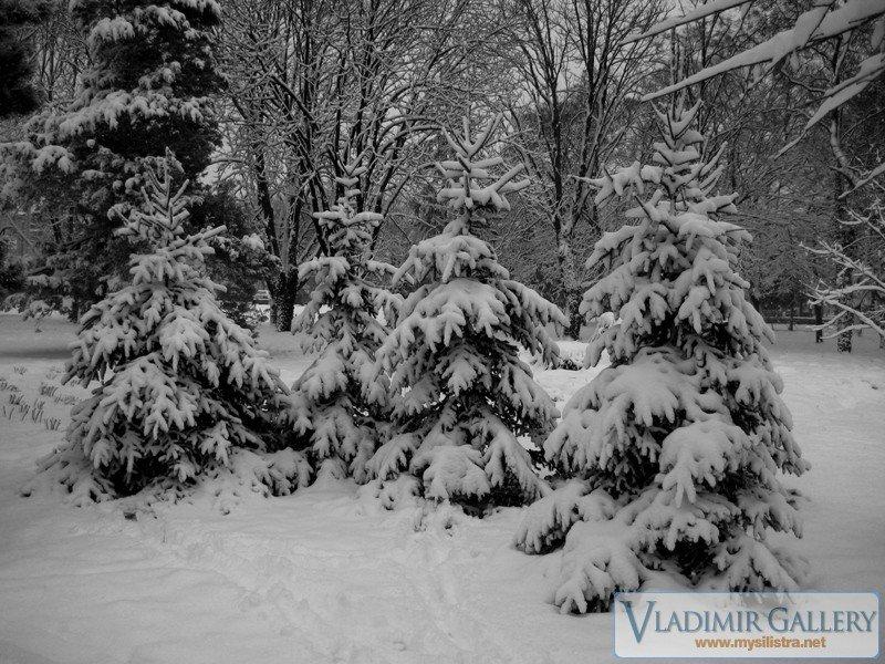 Зима в Силистра