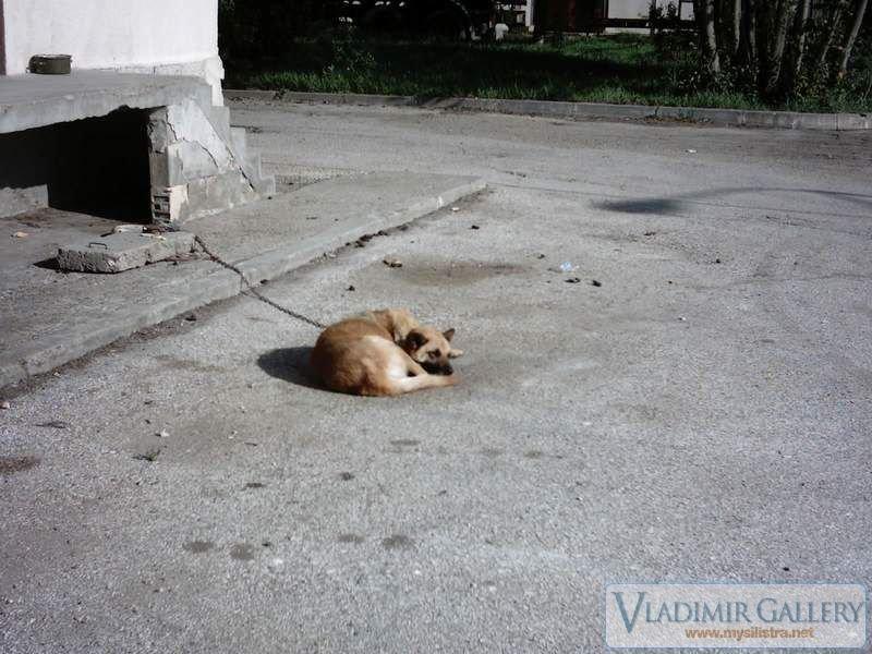 Куче в Калипетрово