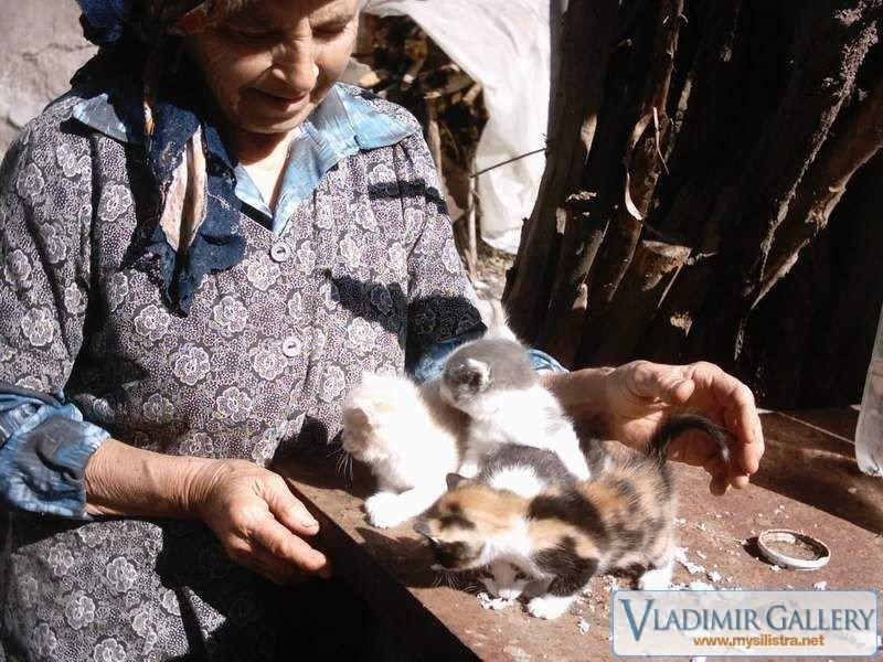 Четири сладки котета
