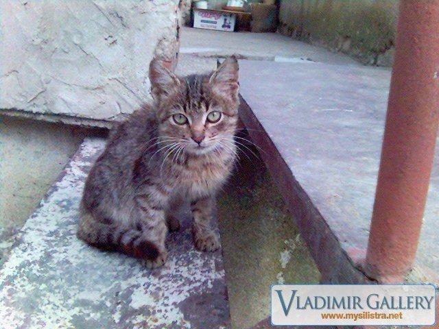 Пак котенцето :)