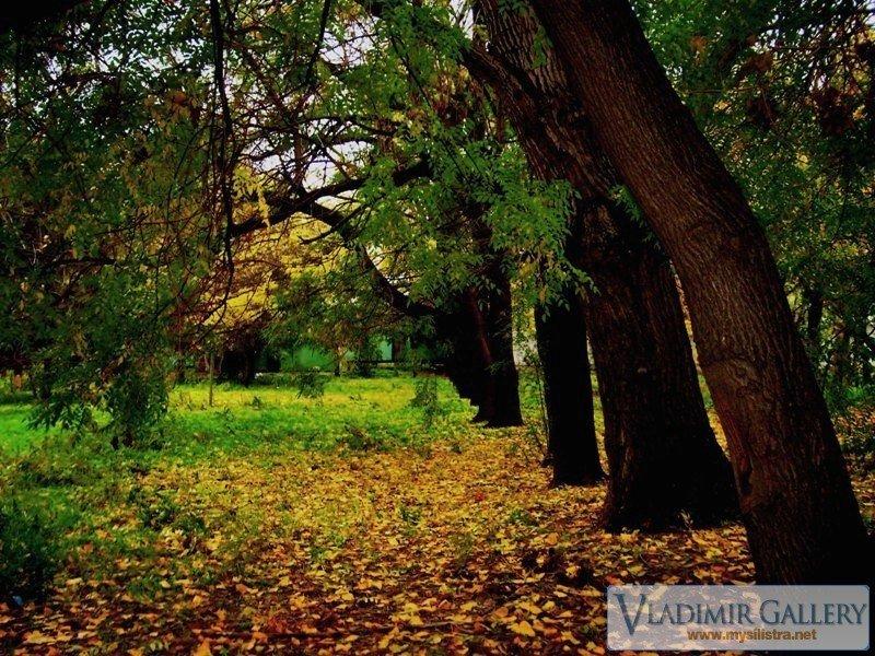 Есен в Дунавската градина