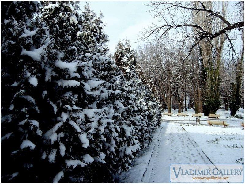 Зима в Дунавски парк