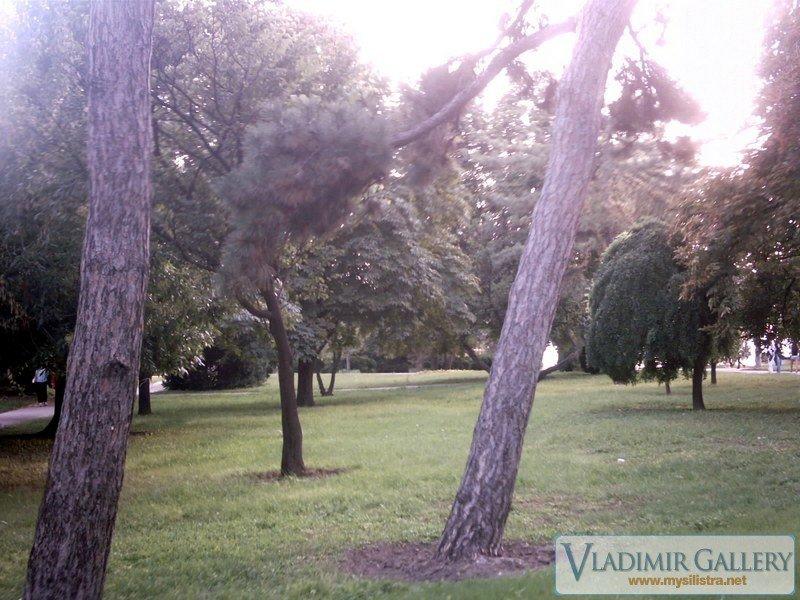 Дунавска градина 12