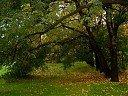 Дунавска есен