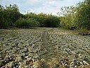 Коритото на р.Дунав край мръсния канал