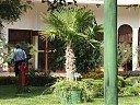 Имаме си и палма