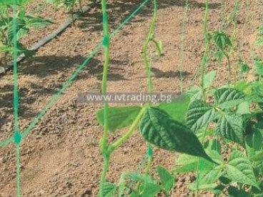 Мрежа за краставици и корнишони Варна