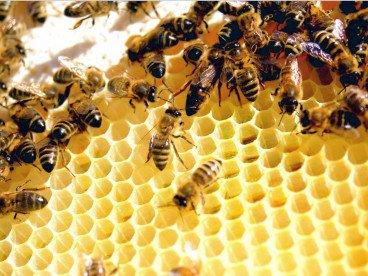 Пчелни семейства (кошери) 25 + инвентар